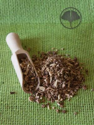 sarsaparilla zielarniaAstron
